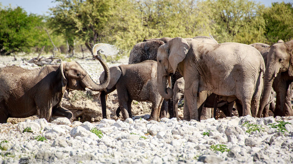 Elephants at the Etosha National Park - safari tours