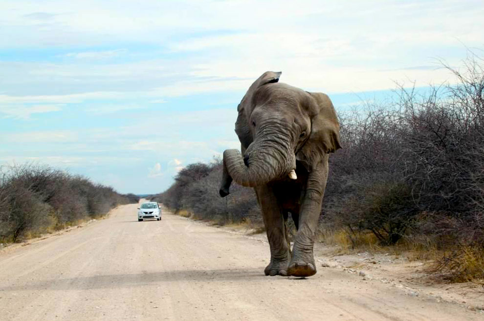 Elephant along the road