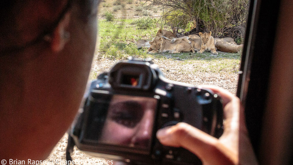 Tourist photographing lions