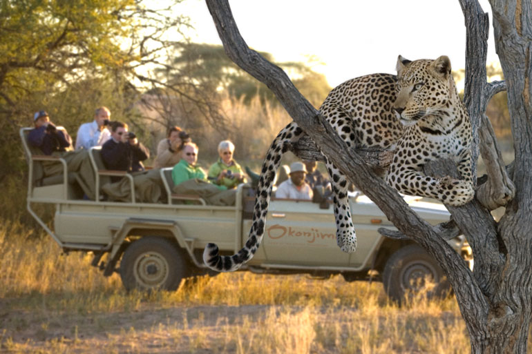 Leopard tracking