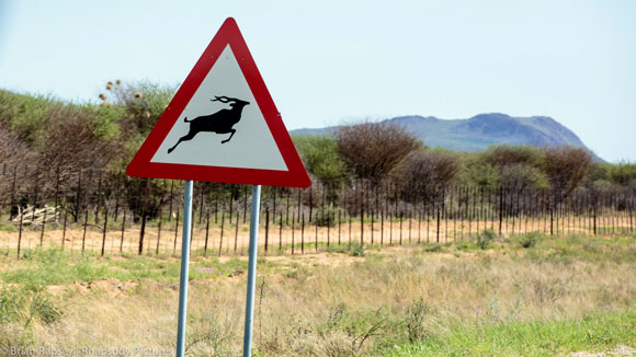 Watch out for kudus - roadsign